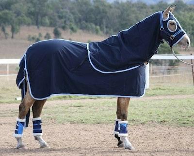 Capriole Equestrian Deluxe Navy Cotton Show Set – Sky trim.