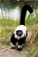 Lemurs need  us to be responsible consumers