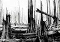 Black Friday Jan 13 1939 left blacked forests and 1.4 m hectares burned