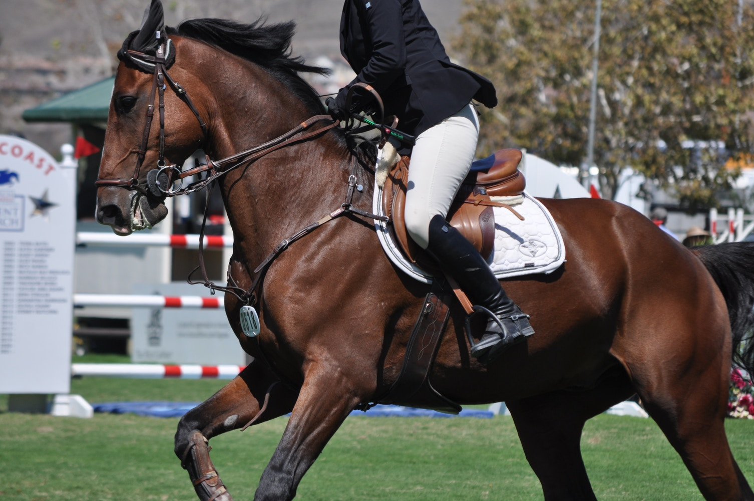 My Virtual Eventing Coach: Applying Dressage to Jumping