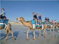 Camel team Cable Beach Broome WA