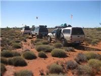 Dune flags flying Beanie Bunch in spinifex country