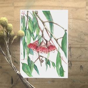 artbrush 'Gumnut' Print