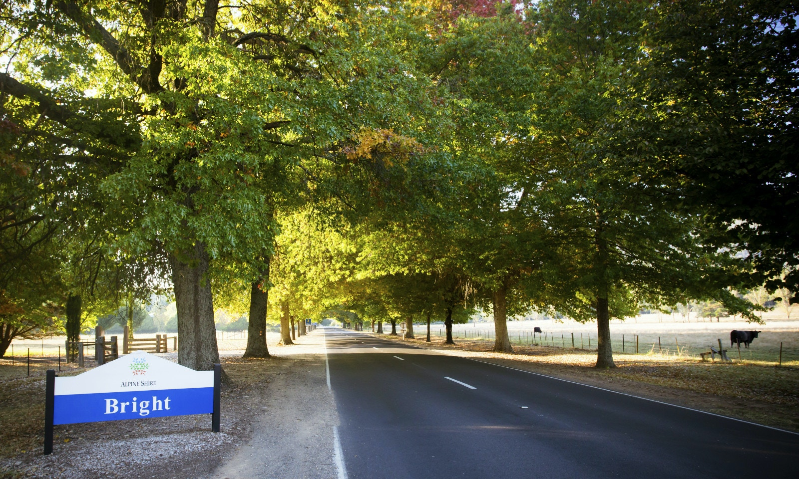 GoSeeAustralia takes the Great Alpine Road to Bright in VIC's stunning north-east