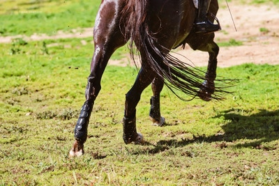 Understanding Equine Gastric Ulcers with SynNutra Equine