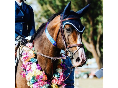 Equipe Patent Hanoverian Bridle