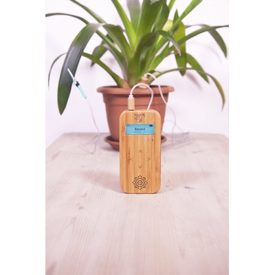 Plant Music Australia Bamboo Basic – Music of the Plants Instrument