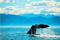 Tales of whales Kaikoura South Island New Zealand