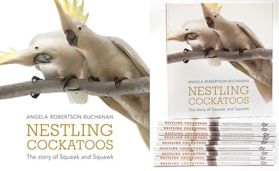 Nestling Cockatoos - The Story of Squeak & Squawk