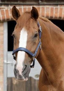 Premier Equine Plain Padded Headcollar