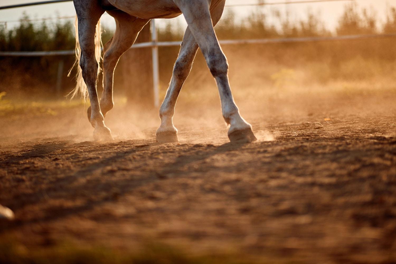 Hiring An Equine Behaviourist