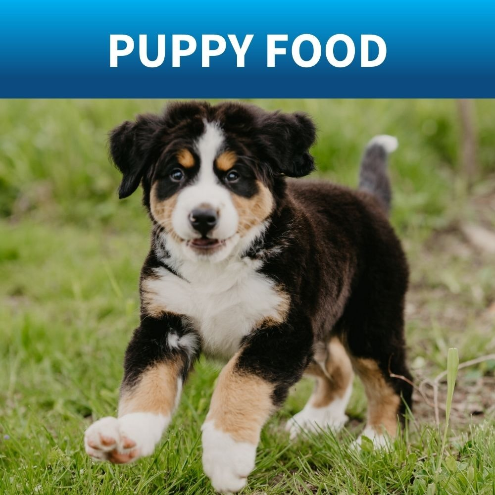 shop food for puppy