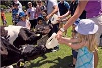 Kids  love Orana Wildlife Park calf feed time