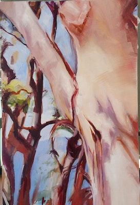 Virginia Bucknell Artworks Eucalyptus Gums I