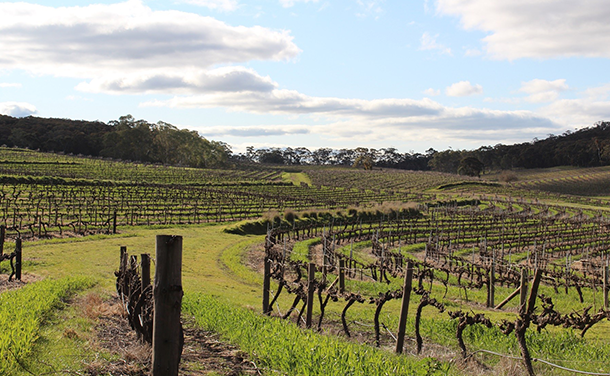 cellarspace-clare-valley-blog-img3-png