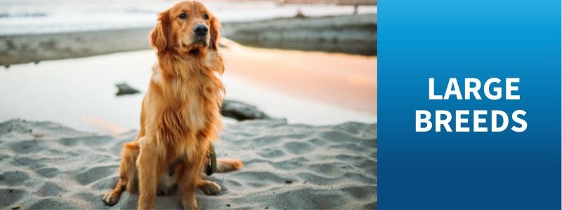 Watch Bondi Vet Large Dog Stories