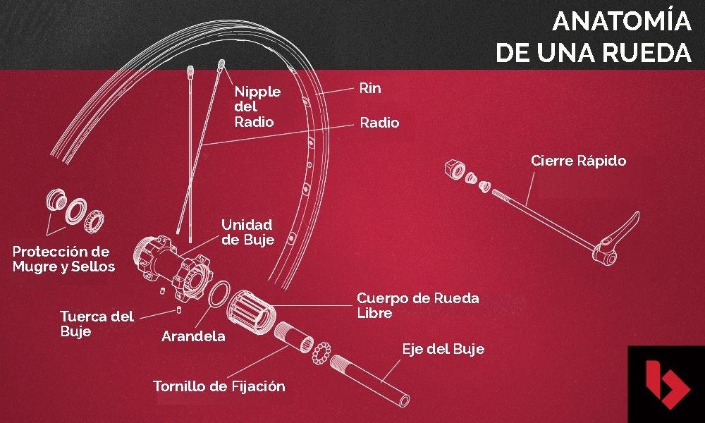 guia-definitiva-ruedas-mtb-anatomia-jpg