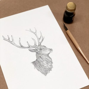 A4 Original Botanical Ink Drawing 'Stag'