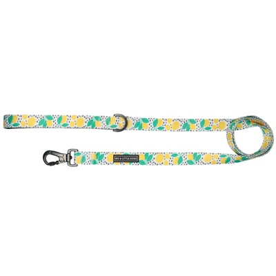Big & Little Dogs Main Squeeze Dog Leash