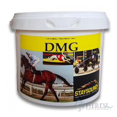 Staysound DMG Energy Booster & Recovery Horse Supplement - 3 Sizes