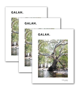 Galah Subscription (Issues 1, 2 and 3)