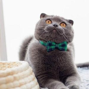 Queenie's Pawprints Kitty Bowtie Cotton Plaid Collar in Green