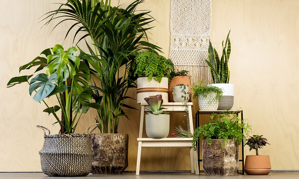 Five Of The Best House Plants