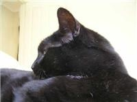 Sleepy GoSeeAustralia's sub editor cat talks about travelling with your pet