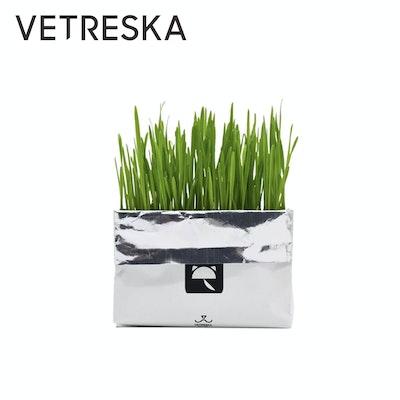 VETRESKA Soilless Cat Grass - Oatgrass