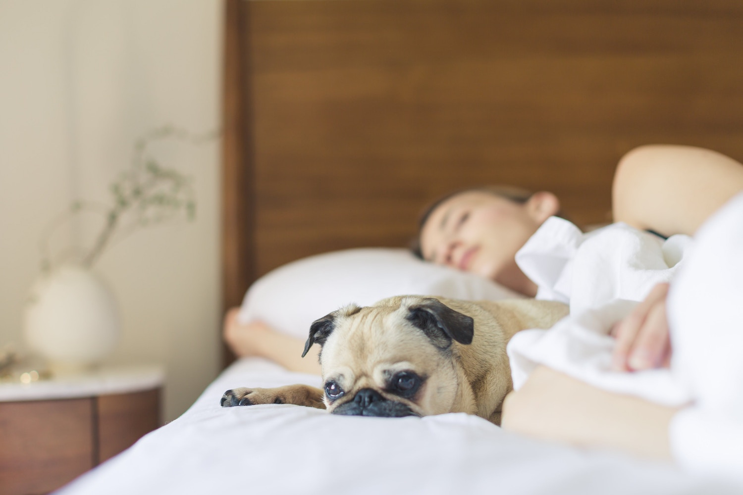 How to Keep Your House (and Carpet) Clean With Pets