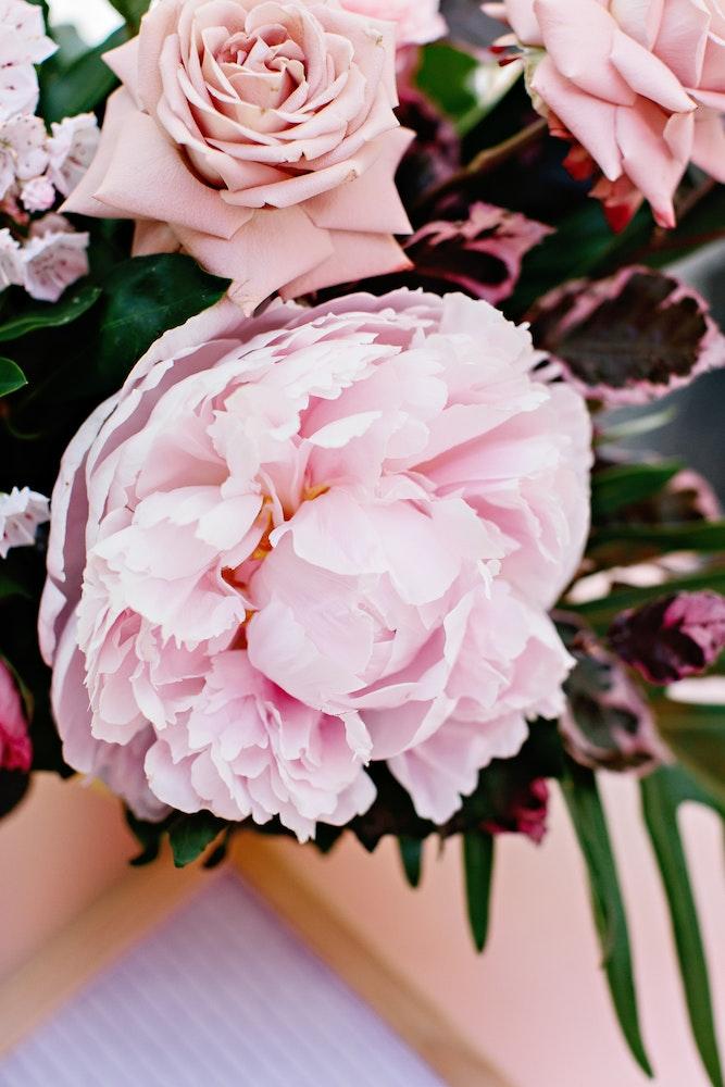 Melbourne Event Florist Dahlia Fandango