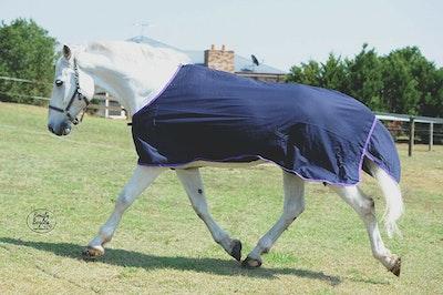 Capriole Equestrian Cotton Show Rug - Purple Trim