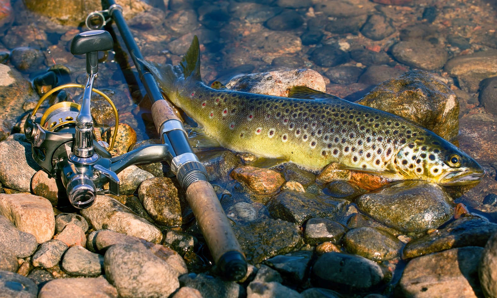 Trout fishing season opens in victoria for What fish are in season