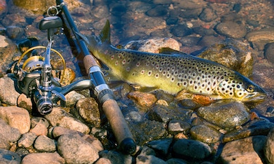 Trout Fishing Season Opens in Victoria
