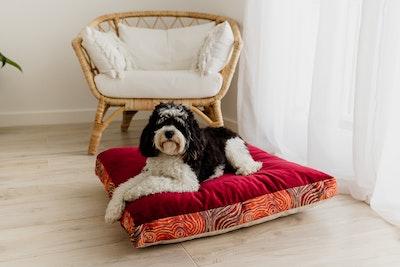 Mariska Ruby Red Velvet Pet Cushion