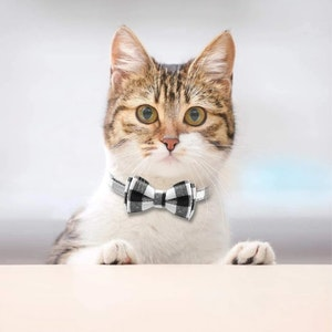 Queenie's Pawprints Kitty Bowtie Cotton Plaid Collar in Black & White