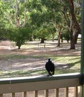 Birds return to local caravan parks