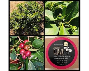 Strawberry Guava Paste 125g
