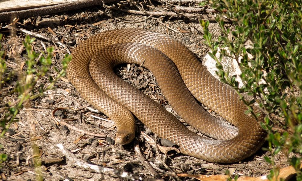 13-tips-summer-camping-guide-brown-snake-grass-ground-jpg