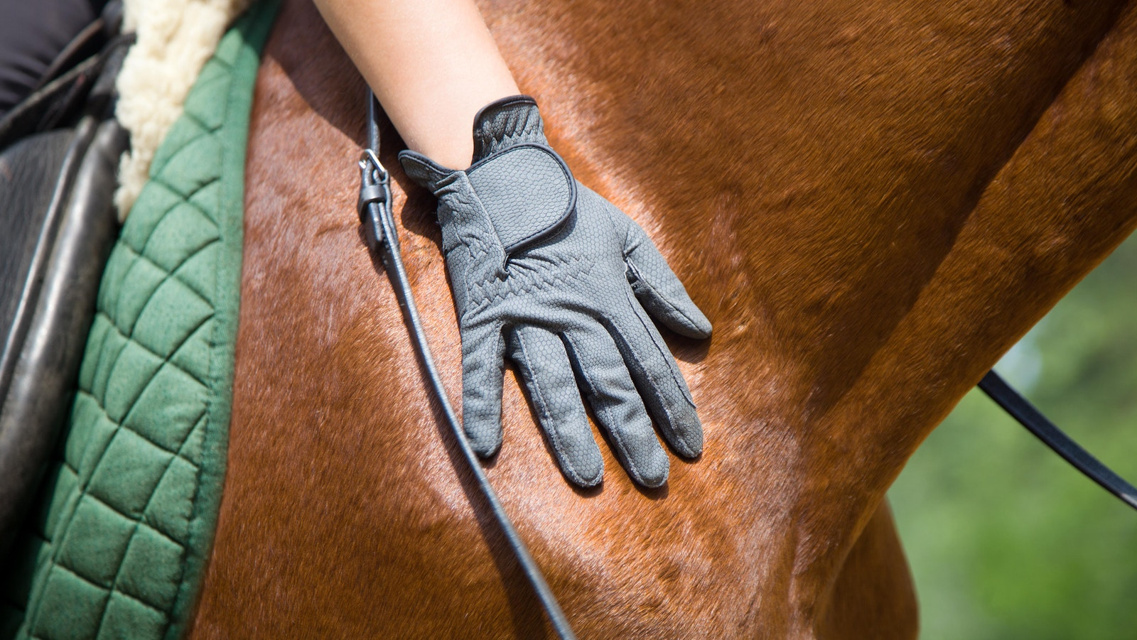 Incorporating Mindfulness: Game Changer for Horse & Rider