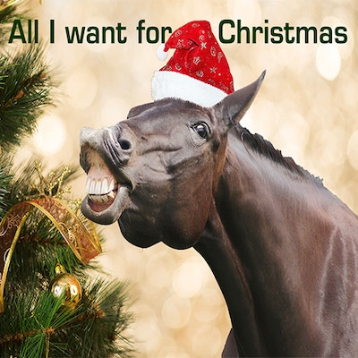 Top Christmas Gift Ideas for Horse Lovers