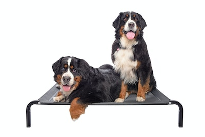 """Flea Free Beds Elevated Dog Bed """"The Original fleafree Brand"""""""