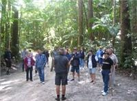 Tour group take in the Fraser Island Rain Forest