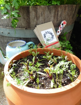 Backyard Garden Enthusiast Seasonal Vegetable Seed Pack 2021