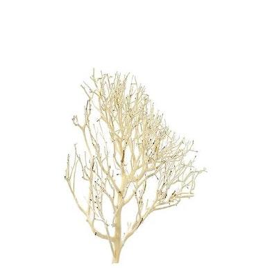 Aqua Naturals Aqua Natural Coral Wood Nano 10 15cm