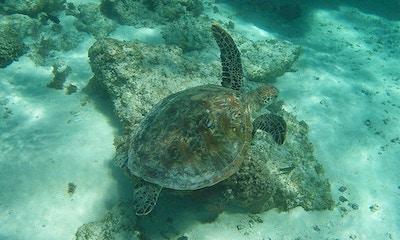 The Breathtaking Ningaloo Reef