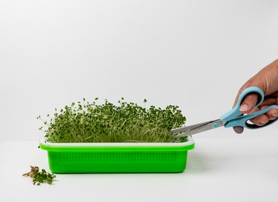 Sproutie Microgreens Tray