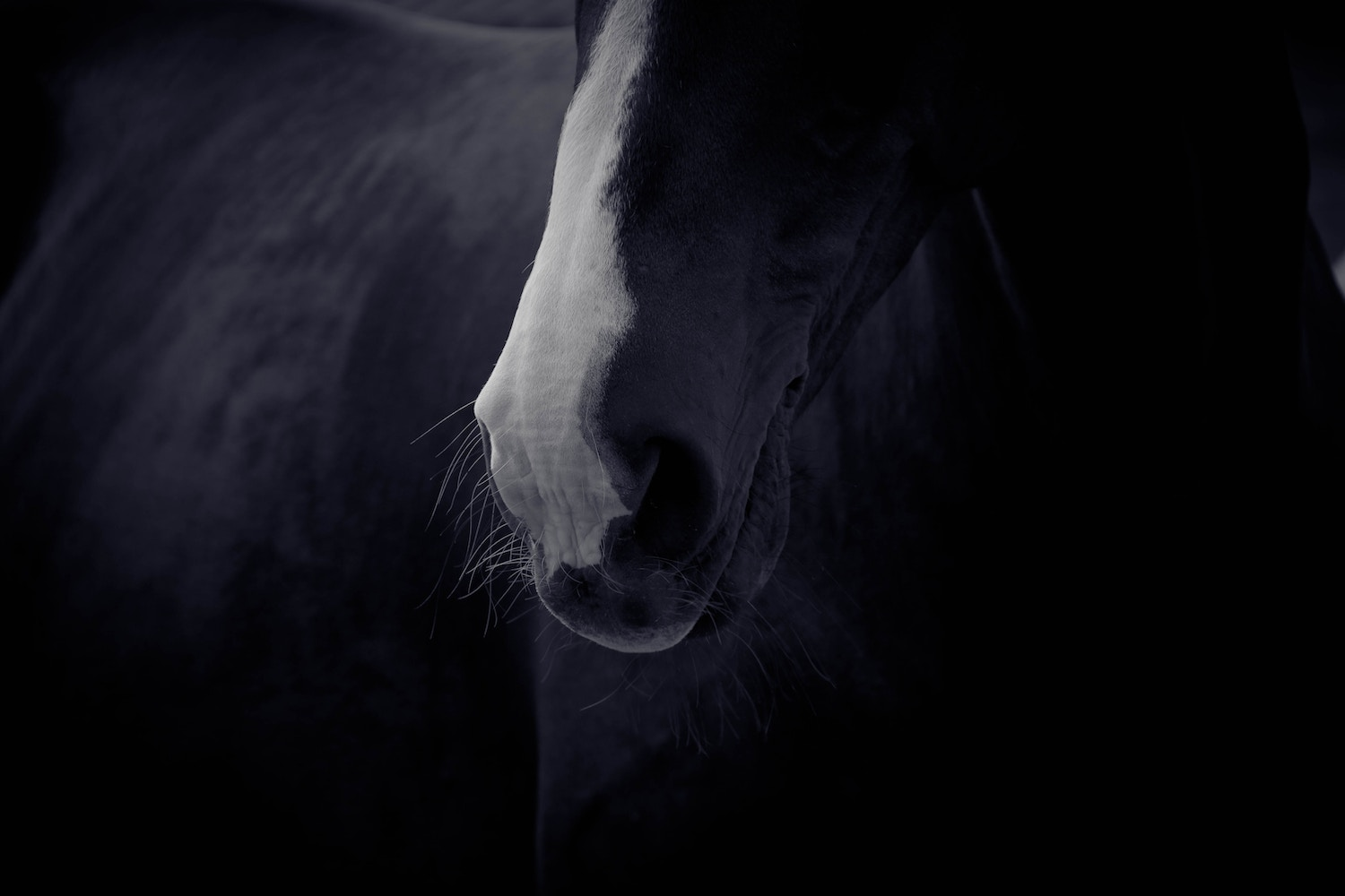 Marketing Tips and Tricks for Equestrian Business Owners