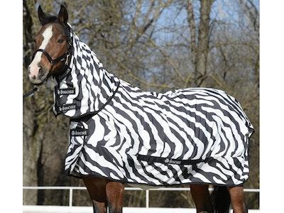 Sweet Itch Zebra