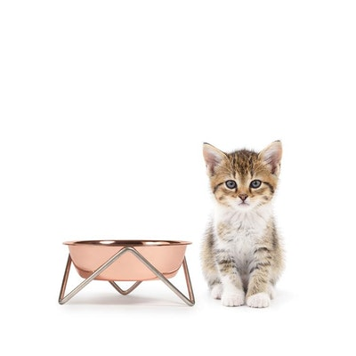Bendo 'MEOW' Cat Bowl Copper bowl on Chrome Stand
